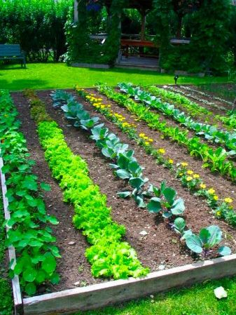 Backyard-Vegetable-Garden-Design-Plans-delightful-Cool-Backyard-Ideas-delightful-backyard-drainage-system-Industrial-Style